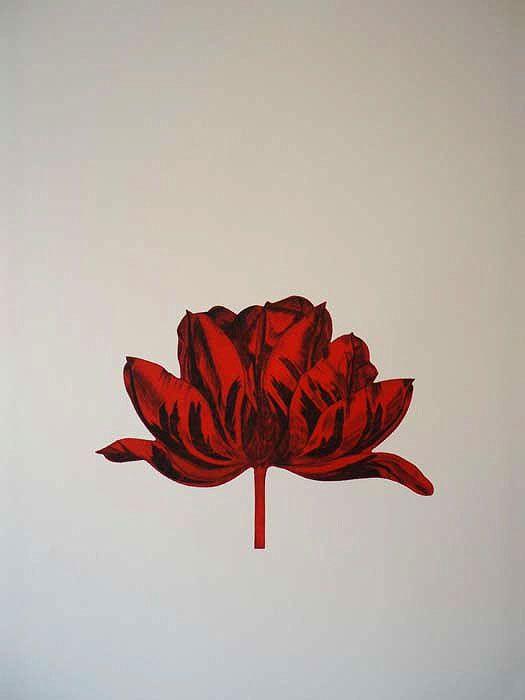 Red Dutch Fair Tulip by Bert Aperloo - Printmaker - Tasmanian artist