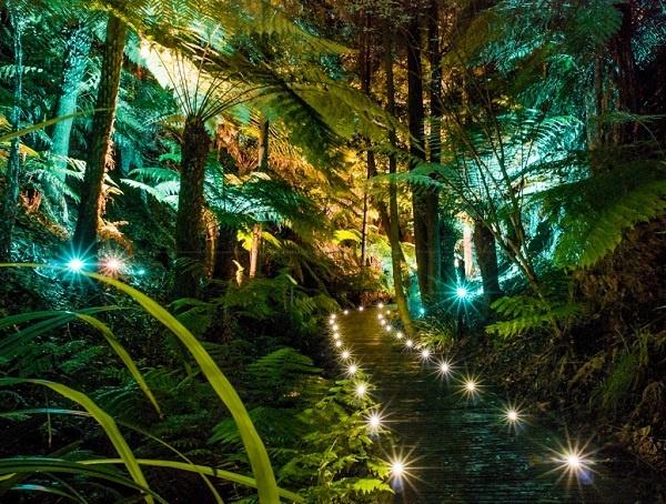 Botanic Gardens AfterDARK - Canberra