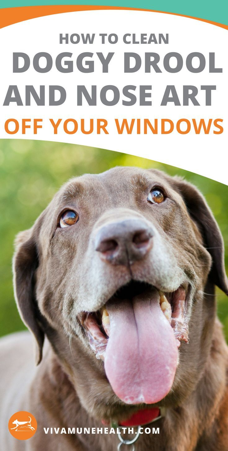 How To Clean Doggy Drool And Nose Art Off Your Windows Vivamune