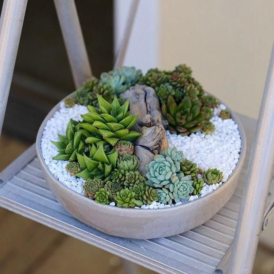 "This simple 12"" round low profile ceramic pot is a perfect piece to house this simple, cool and clean succulent arrangement adorned with white rocks and driftwo"