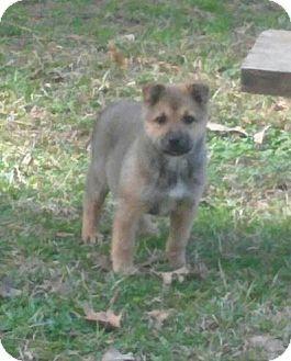 Southington, CT - Australian Shepherd Mix. Meet Martina, a puppy for adoption. http://www.adoptapet.com/pet/17490266-southington-connecticut-australian-shepherd-mix