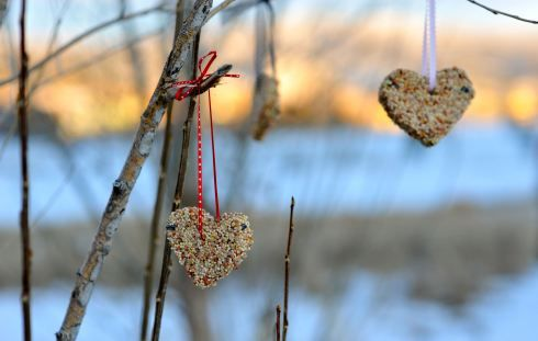 Heart shaped bird feeders: Shaped Bird, Gift, Bird Feeders, Valentines Day, Craft Ideas, Birds, Valentine S