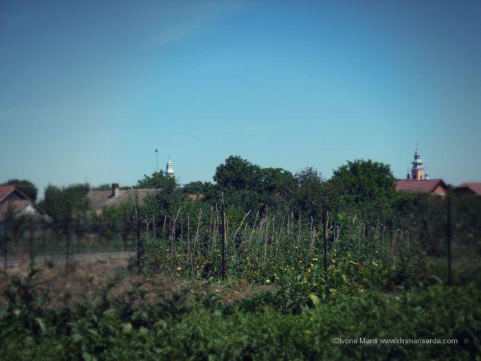Romanian countryside - Felnac Village