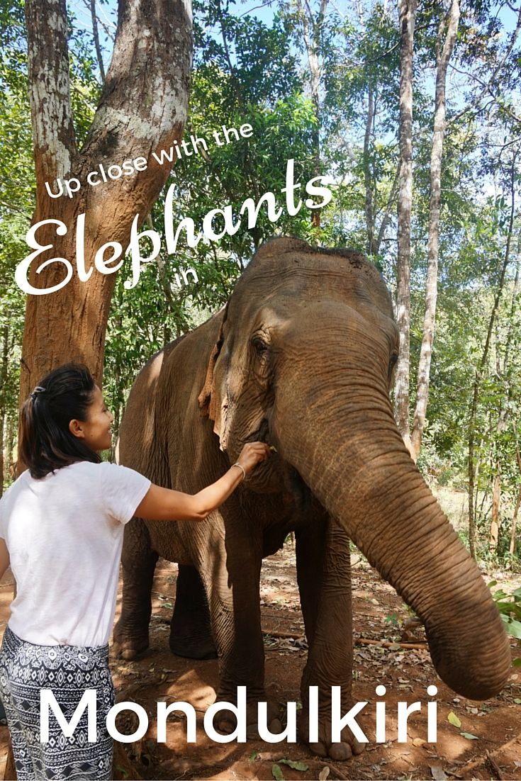 Amazing experience and adventure with the elphants at the Mondulkiri Project in northern Cambodia