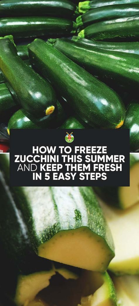 Abundant Zucchini harvest and not sure how to preserve it? Don't worry, here's the complete guide to how to freeze Zucchini, and a few easy recipes to boot.