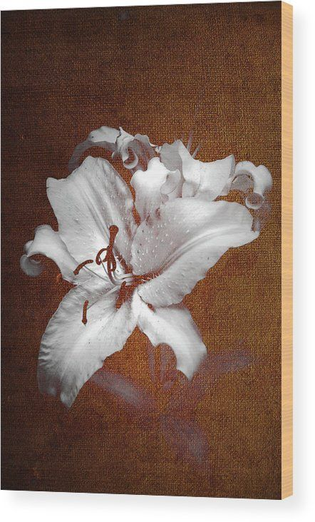 Jenny Rainbow Fine Art Photography Wood Print featuring the photograph Vintage White Lilies by Jenny Rainbow
