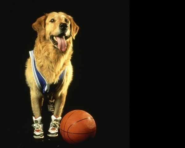 "Buddy. Buddy — from the ""Air Bud"" movies — was his real name, and he also played Comet in Full House!"