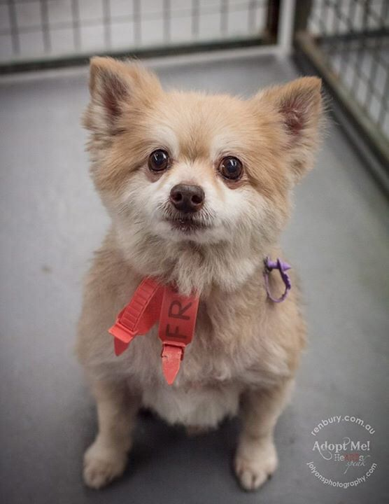 I just checked the Renbury Farm Animal Shelter website and little Sam got himself adopted today! \u003C3
