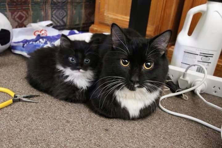 Cute black and white kitties