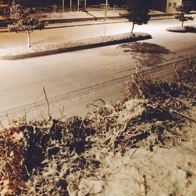 knismesis / #눈 #나무 #나뭇가지 #그림자 #도로#snow #tree #shadow #road / #골목 #거리 #식물 / 2014 01 20 /