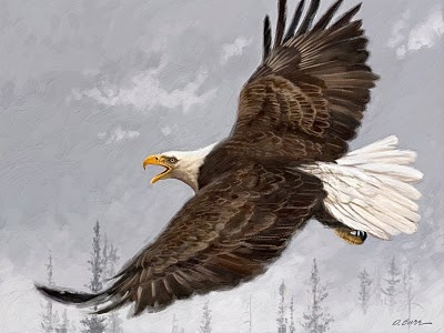 Eagle.  Check this artist out, Dan Burr Illustrator: Eagle Painting