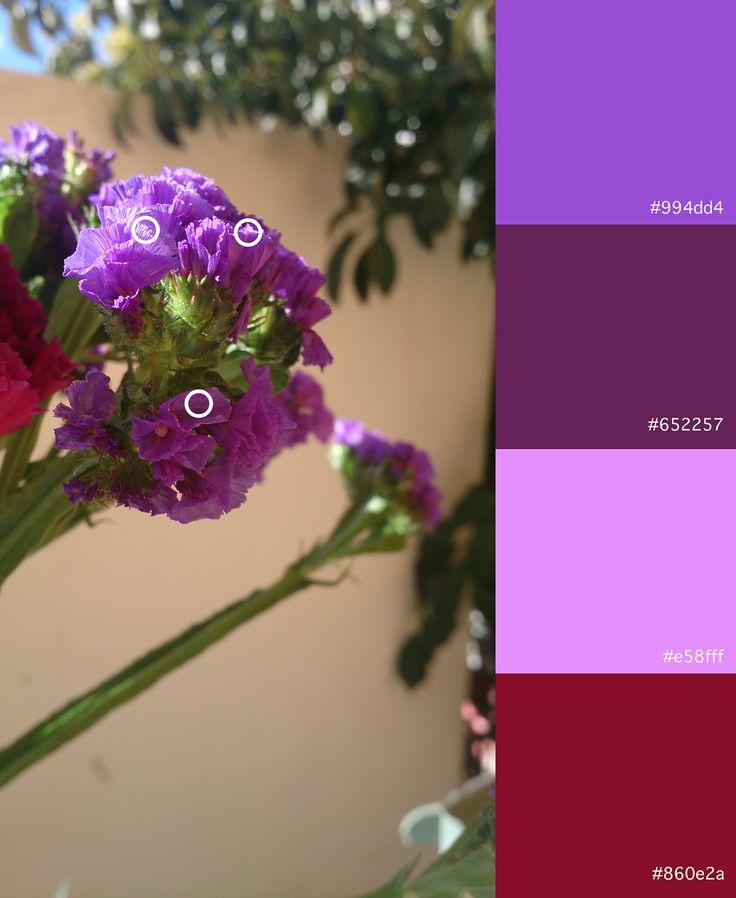 Violeta (2) Violeta (3) Violeta (4) Rojo (1)
