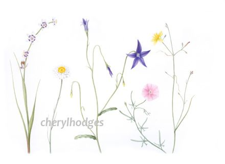 "Cards are A6 (10.5 × 14.8cm), blank inside for your own message, and come with white envelopes. Cheryl says: ""Reproduced from an original watercolour painting of wildflowers from the Australian Capital Territory."" This card is ready to ship. Cheryl also offers a pick up option. If you'd like to pick up your order please comment in 'note to seller' at checkout."