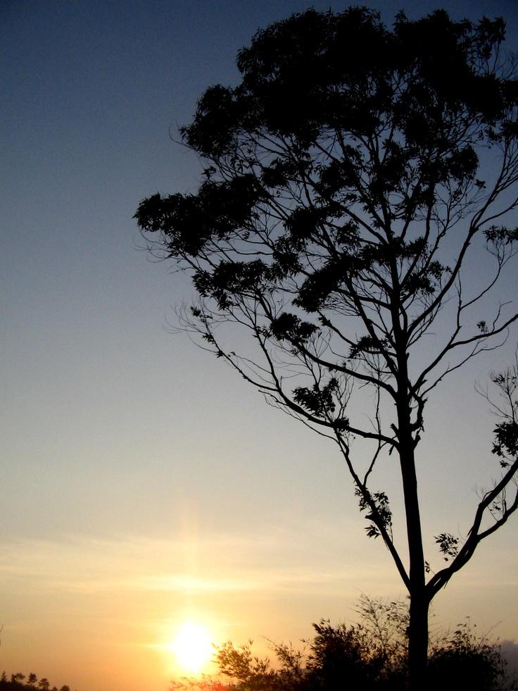 sunrise under a tree