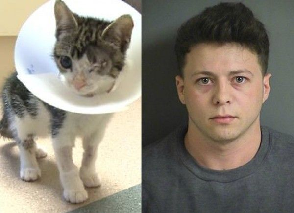 Justice for Fritz, Iowa cat left blind after being ...
