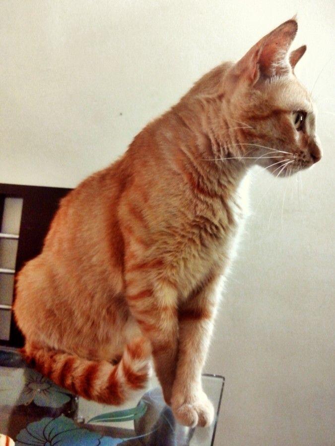 Profile... Nacho
