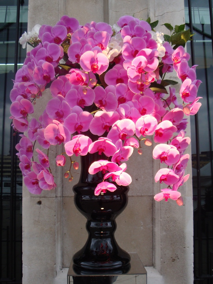 Beautiful hot pink phalaenopsis orchids in a black glass vase