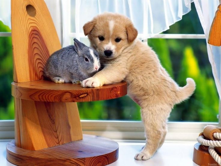 bunny and baby.