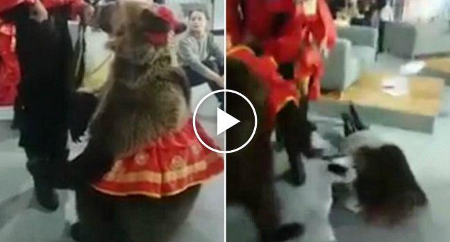 Mulher Desrespeita Normas De Segurança e Tem a Infeliz Ideia De Tocar Em Urso