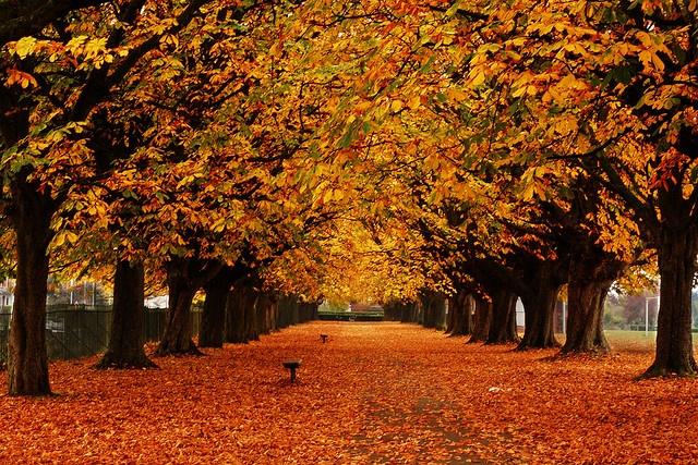 Hamilton Park, Taunton, Somerset, England