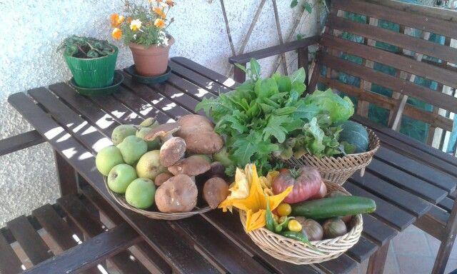 Frutta Verdura Estate Orto Pomodori Cetrioli Peperoncini Zucca Insalata Mele Pere Funghi