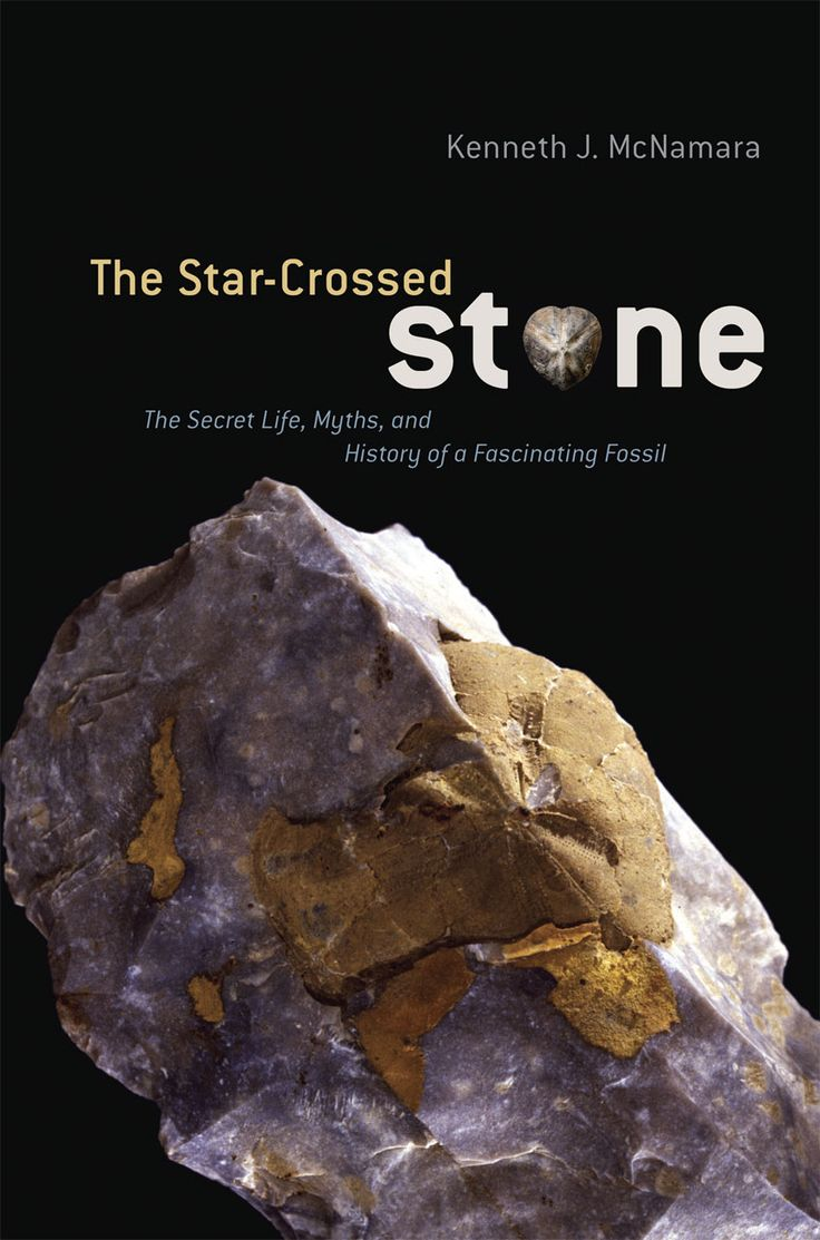 Throughout the four hundred thousand years that humanity has been collecting fossils, sea urchin fossils, or echinoids, have continually been among the most prized, from the Paleolithic era, when they decorated flint axes, to today, when paleobiologists study them for clues to the earth's history. In The Star-Crossed Stone, Kenneth J. McNamara, an expert on fossil echinoids, takes readers on an incredible fossil hunt, with stops in history, paleontology, folklore, mythology, art, religion…