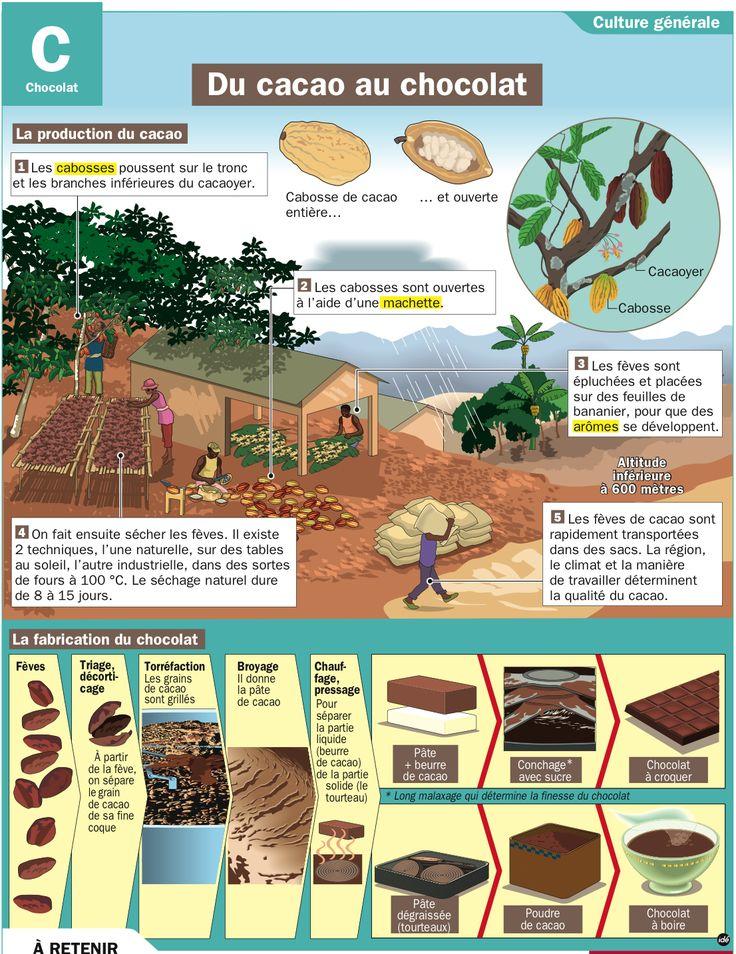 Fiche exposés : Du cacao au chocolat                                                                                                                                                                                 Plus