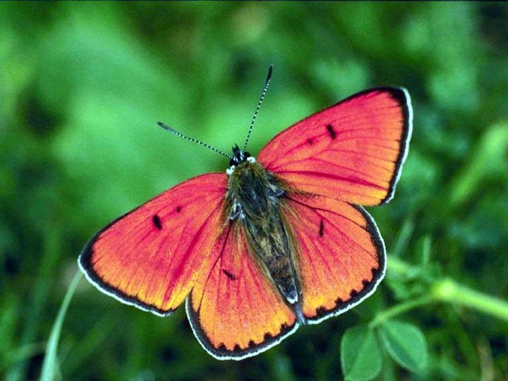 butterflies pictures | Butterfly - The Most Beautiful Insect - The Wondrous Pics