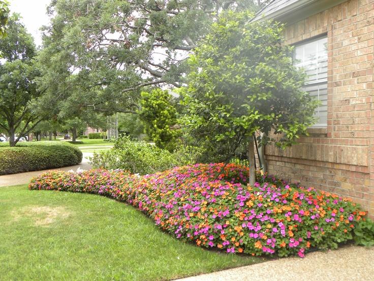 Gorgeous Impatiens In Flower Bed Yard Pinterest Pink 400 x 300