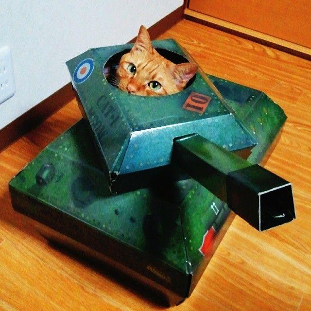 戦闘体勢に入りました #ねこ#猫#ネコ#cat#... PhotosForward戦闘体勢に入り