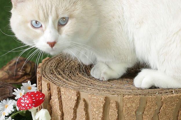 Lass alles stehen und liegen und bau Deiner Katze diesen Baumstumpf-Kratzbaum