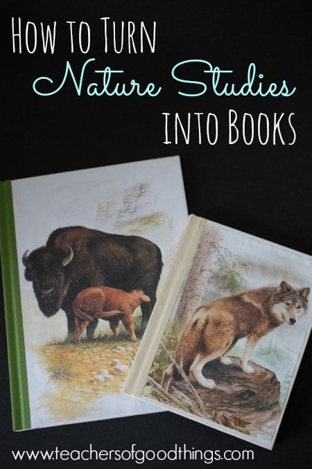 Pin653 Share14 Tweet +1 Share StumbleShares 667 As a Charlotte Mason educator, nature studies have been a big part of our homeschooling. When we transitioned from elementary years into middle school, I wanted to begin to gentle bridget the gap of nature and science with my children and what we did turned out to be […]