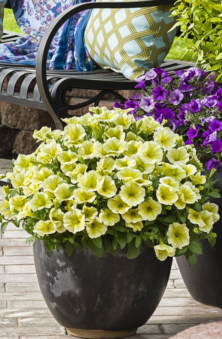 56 Best Single Plants For Containers Images On Pinterest 400 x 300