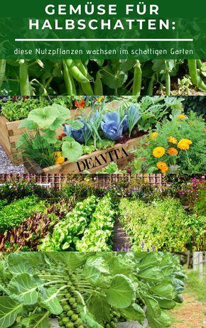Manche Nutzpflanzen Konnen Einfach Nur In Sonnigen Standorten