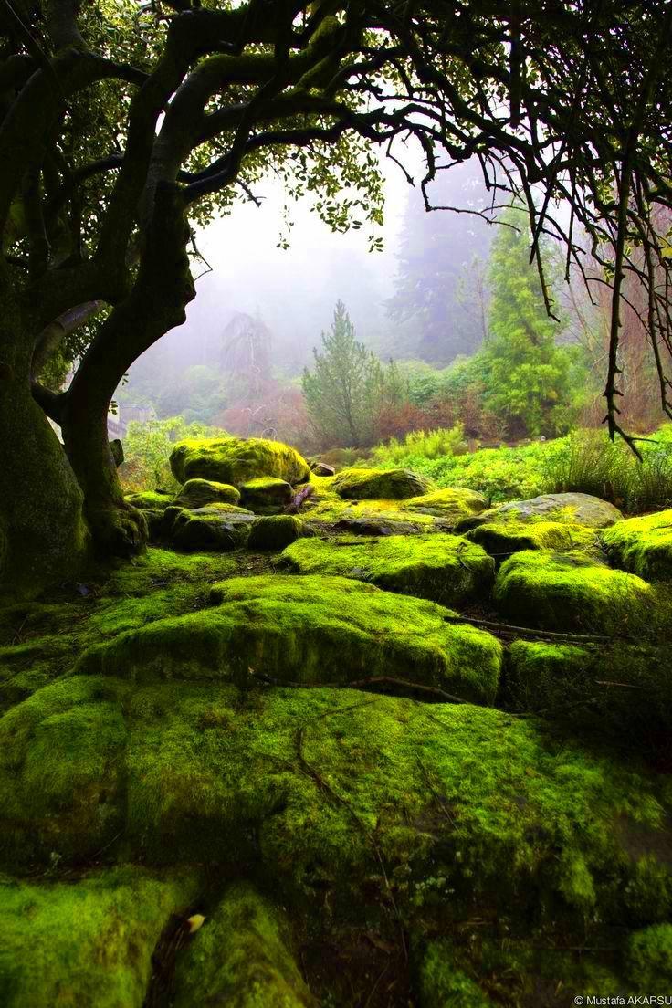 Verts