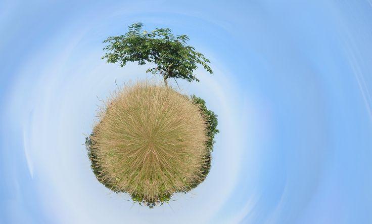 Tree on a tiny planet.