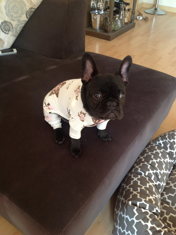 Judge the Frenchie in his PJs #frenchbulldog #frenchie
