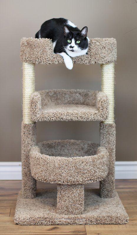 Best 25 Cat Condo Ideas On Pinterest Cat House Diy Diy