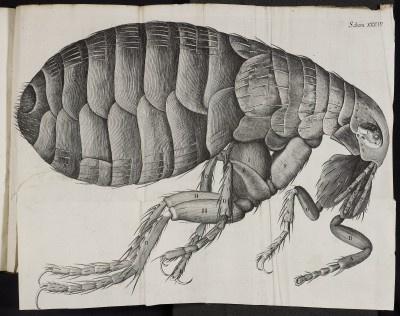 Robert Hooke, Micrographia __ Lister E 7, plate XXXIV
