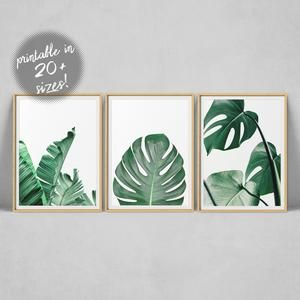 Palm Leaf Print Wall Art Set Of 3 Prints Tropical Leaf Etsy In 2020 Leaf Wall Art Wall Art Prints Tropical Leaf Print Large palm leaves are a tropical trend that are easily produced with our beautiful leaf stencils. pinterest