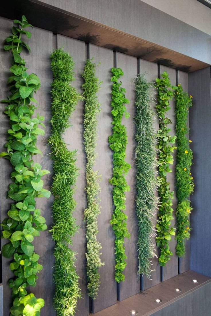 This Living Wall In A Kitchen Can Be Used As An Indoor Herb Garden