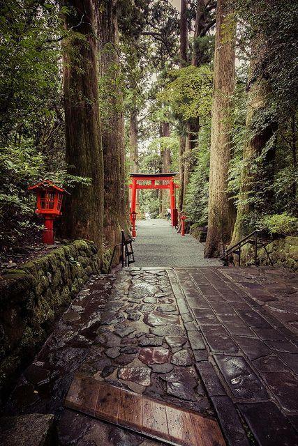 Path in Hakone, Japan