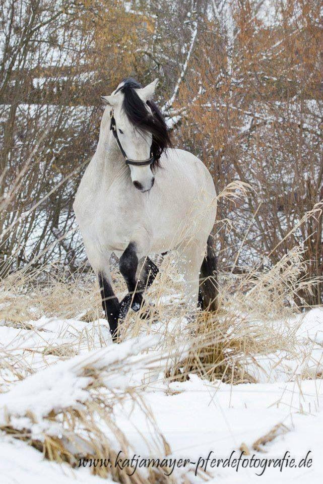 die besten 25 pferde im schnee ideen auf pinterest. Black Bedroom Furniture Sets. Home Design Ideas