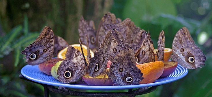 """Lunch time,"" by eev99 via Trek Earth -- Photographer's Note: ""A feeding cluster of butterflies snacking on fruit at the butterfly display in Niagara Falls."""