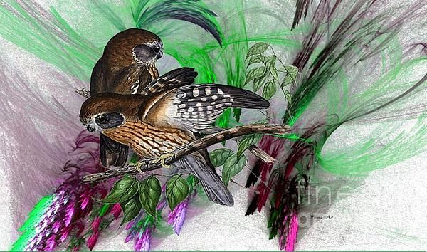 Two hand drawn Boobook Owls with a digital oil painting...