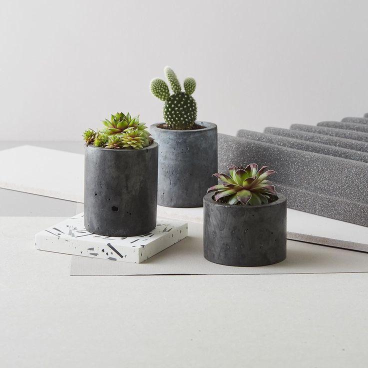 Instagram succulentes cactus carnivores pinterest for Porte plantes dinterieur truffaut