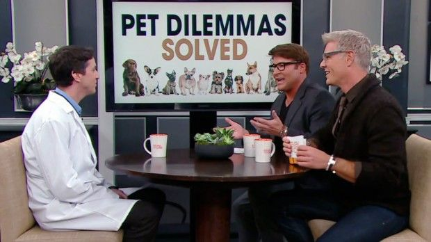 Your Burning Pet Dilemmas Solved!