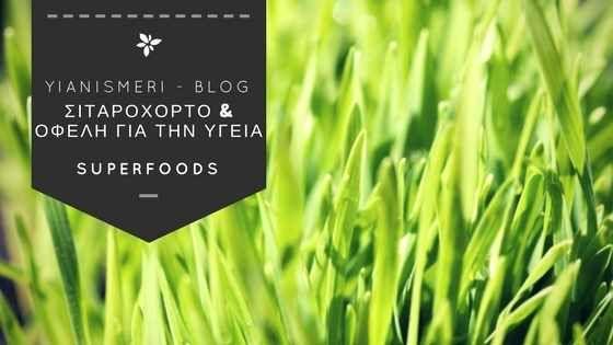 Το #Σιταρόχορτο καλλιεργείται τόσο εσωτερικά όσο και εξωτερικά όσον αφορά στον χώρο και τις συνθήκες που απαιτούνται. Πρόκειται για ένα βλαστάρι από το σπόρο του γνωστού σε όλους σιταριού. Οι καλλιέργειες σε #σιταρoχορτο εσωτερικού χώρου είναι που αξιοποιούνται κυρίως για την δημιουργία του συμπληρώματα διατροφής.