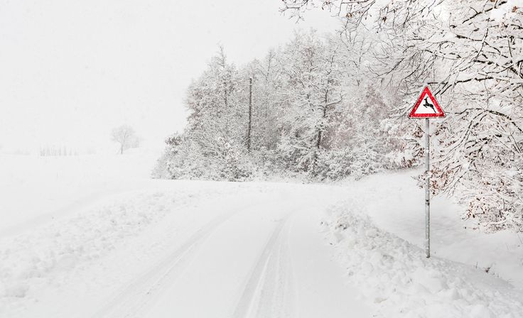 Fotografía veados (apenas) cruzamento de Claudio Stefanini na 500px