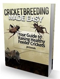 17 Best Images About Crickets On Pinterest Roaches